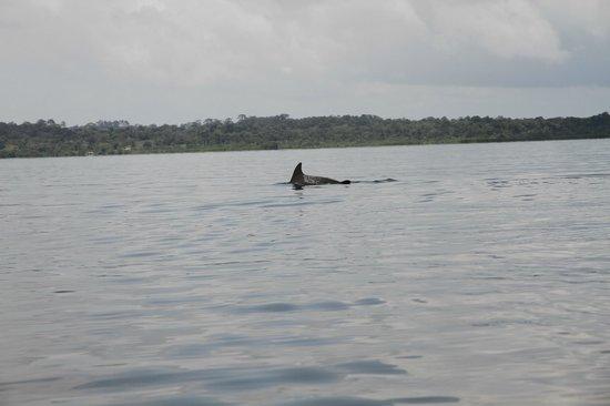 Dolphin Bay Hideaway: Delfiner