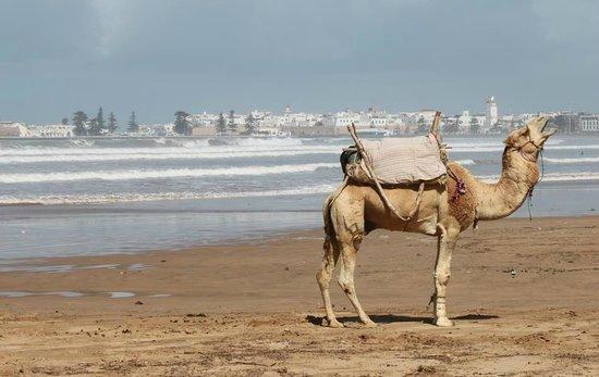 Hotel Vent des Dunes: la grande plage pas loin