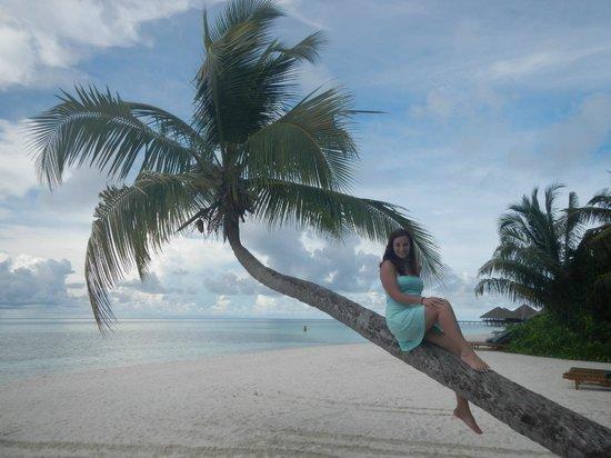 Medhufushi Island: Iconic Tree