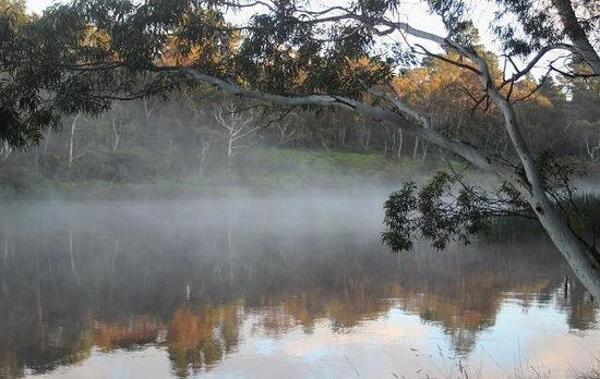 Lakeside Bed and Breakfast: Morning mist at Wentworth Falls Lake
