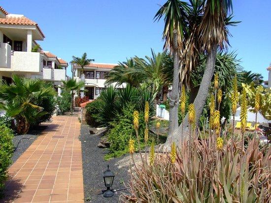 Fuentepark Apartamentos: Garden walkway