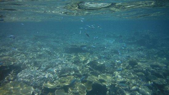 บันยันทรี วับบินฟารุ รีสอร์ท: snorkelling