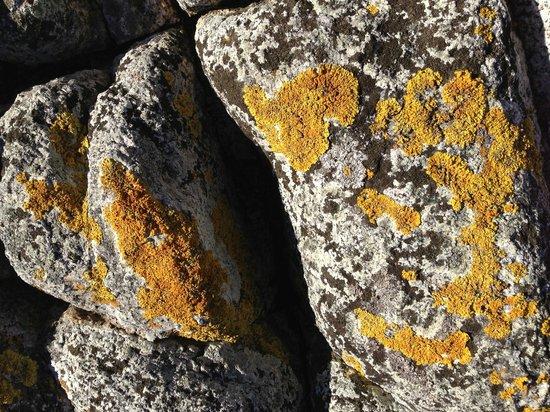 Tasmania, Australia: Liken' the Lichen