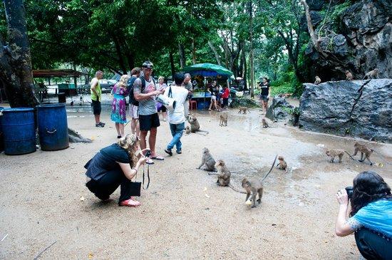 Buddha Cave Temple (Wat Suwannakuha): monkey