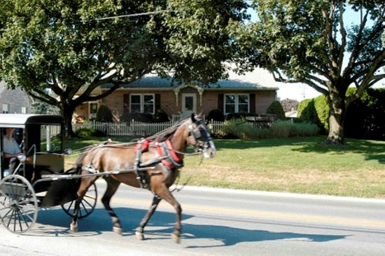 The Amish Guest House and Cottage