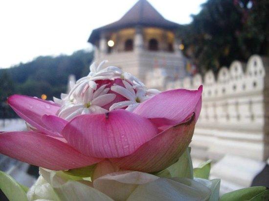 Bentota, Sri Lanka: Kandy tooth temple