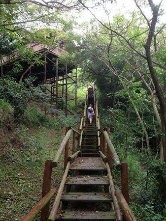 Rain Farm Game and Lodge: walk way to tree tents