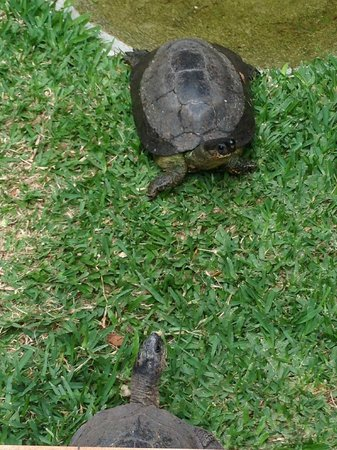 Out of Bounds Hotel: Turtles On the Grounds