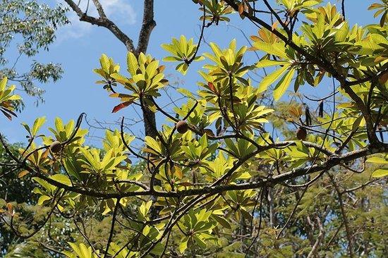 Hotel Nututun Palenque: The garden.