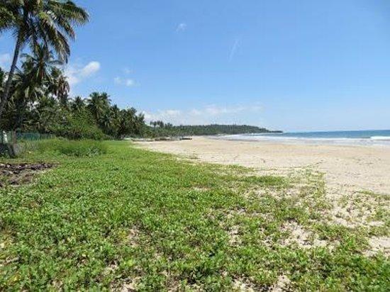 Mawella Beach Resort: la bella grande spiaggia davanti al resort