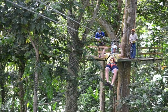Calabash Cove Resort and Spa: rainforest zip lining excursion