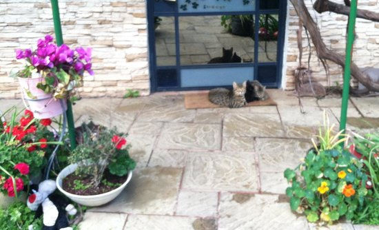 Arbel Guest House Shavit Family: Kitties waiting for us (or anyone)