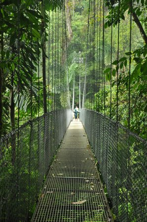 Arenal Manoa Hotel: Hanging Bridges tour