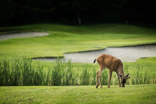 Fairwinds Golf Club: wildlife on the course