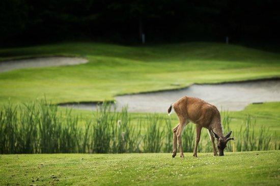 Fairwinds Golf Club 사진