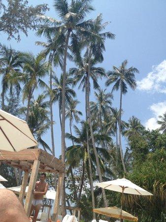 Nikki Beach Resort & Spa: Palm Trees