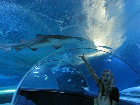 requin hampton beach