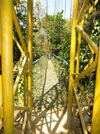 Pura Vida Gardens and Waterfalls: Rain forest skywalk swinging bridge