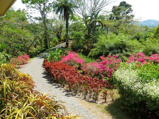 Pura Vida Gardens and Waterfalls照片