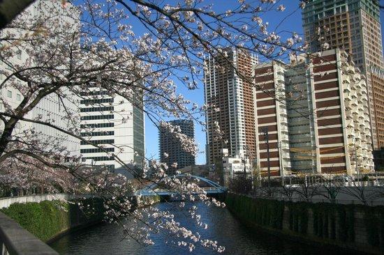 New Otani Inn Tokyo: ホテルの目の前は目黒川桜並木。桜並木ビューのお部屋もございます。