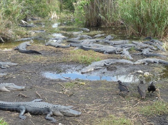 Flamingo Campground: View from the boardwalk of the Anhinga trail!