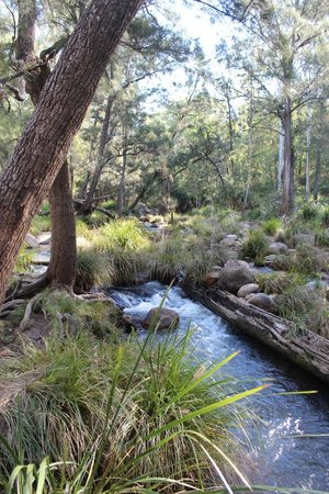 Mt Barney Lodge Country Retreat: Walk along the running creek