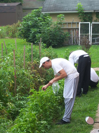 Cafe Cimino Country Inn: chef Eli and staff picking fresh herbs
