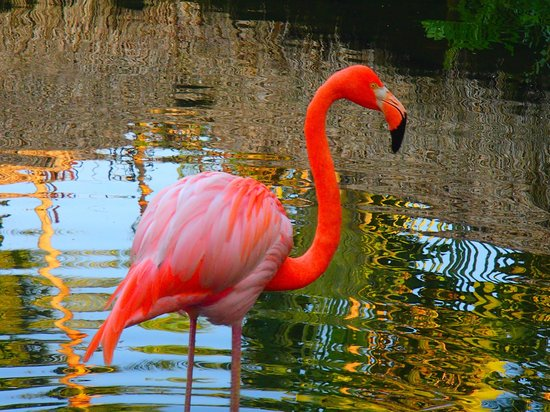 Natura Park Beach - EcoResort & Spa: Beautiful Flamingos