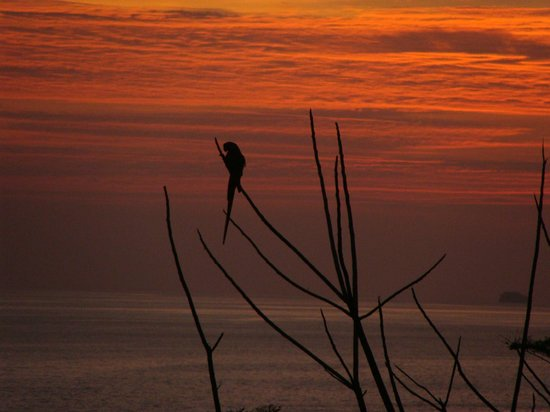 Lookout Inn Lodge: Macaw at sunset