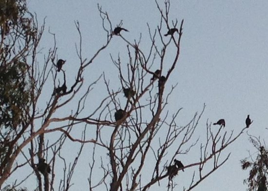 Heron and Cormorant Rookery: View from The Inn at Morro Bay