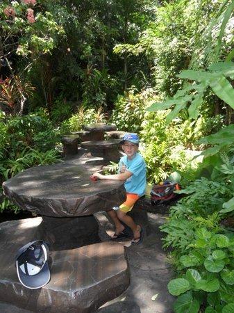 Dino Park : Shady Restaurant Area