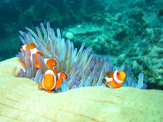 Baruna Dive Center Tulamben