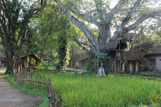 Sigiriya Village Hotel 사진