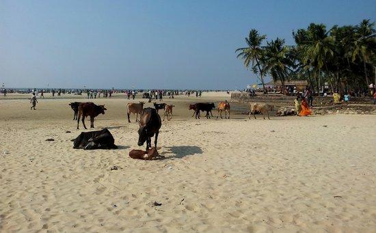 Sandray Resort: Colva beach