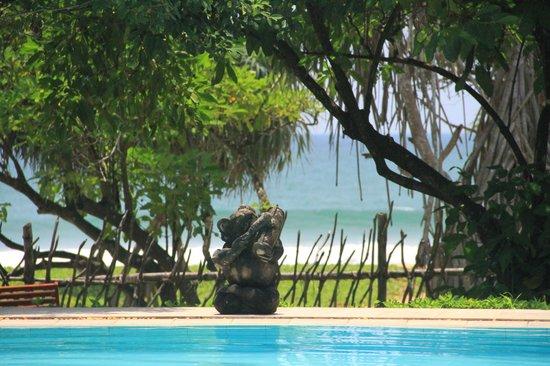 Aditya Pool