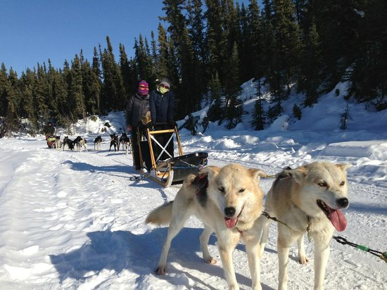 ‪Muzzy's Place Dogsled Adventure -  Day Tours‬
