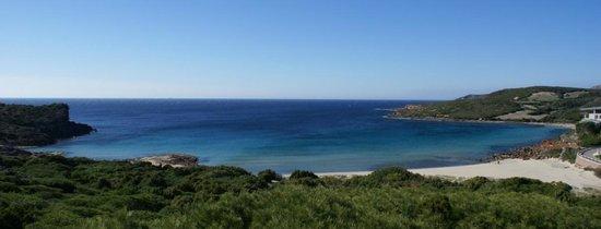 La Caletta: La spiaggia vista dalla pineta