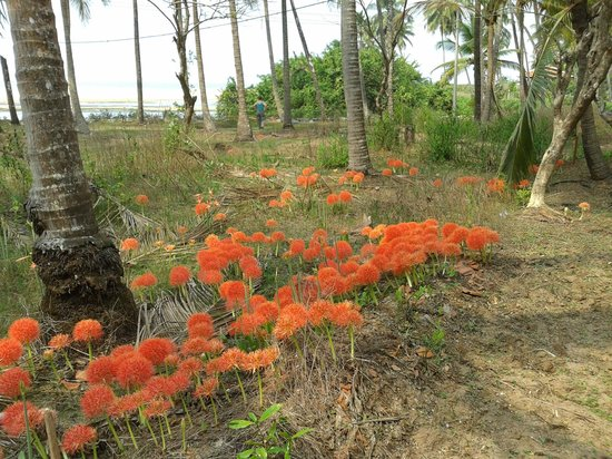 Blue Mermaid Homestay: Flowers in woods nearby