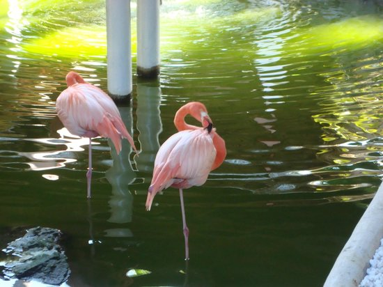 Paradisus Punta Cana Resort: These flamingos also were right near the restaurants, just haning out
