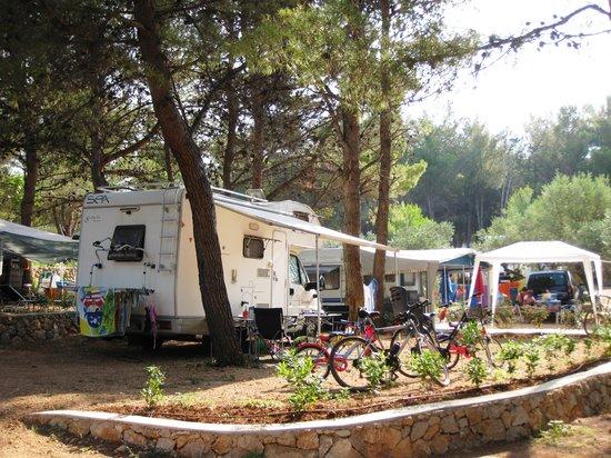 Camp Kovacine: A plot