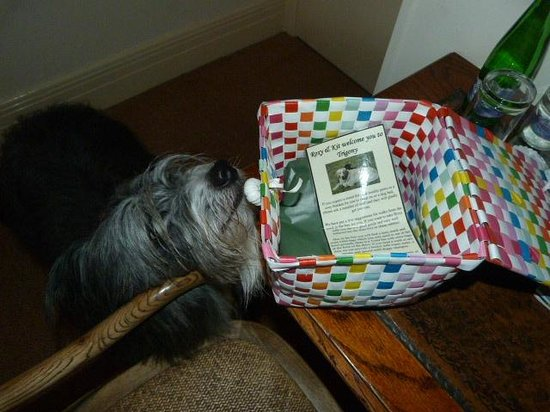 Trigony House Hotel and Garden Spa: Happy dog finds doggie welcome pack!