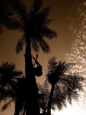 7 Djorson: Couche de soleil in Biombo