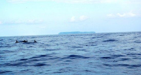 Cano Island: Dolphins