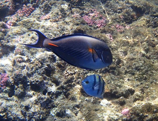 The Grand Hotel Sharm El Sheikh: Little & large long the house reef