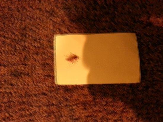 The Forum: dead roach
