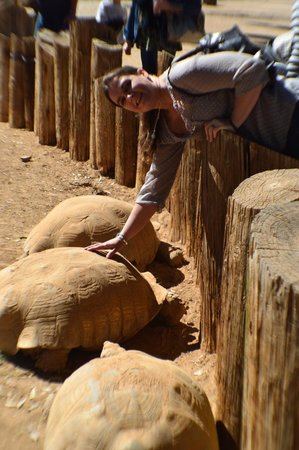 Wildlife World Zoo and Aquarium: these tortise feel like petrified rocks
