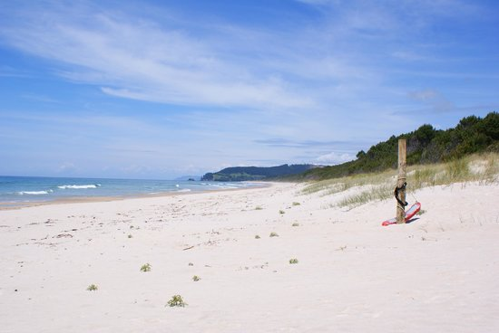 Opoutere Coastal Camping : amazing white beach