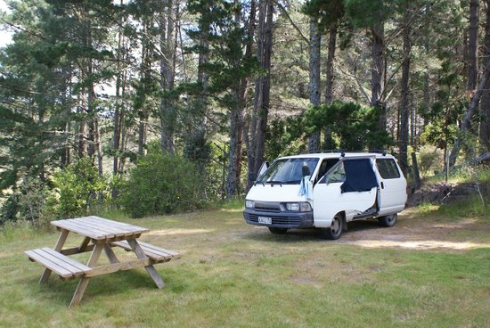 Opoutere Coastal Camping : campsite surrounded by green