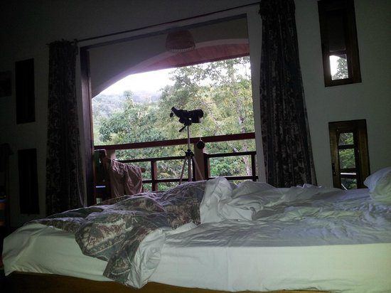 Cuffie River Nature Retreat and Eco-Lodge: The view from my bed