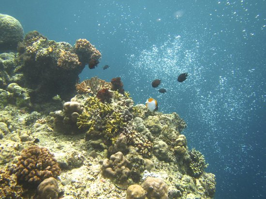 26 picture of raja laut dive resort bunaken island tripadvisor - Raja laut dive resort ...